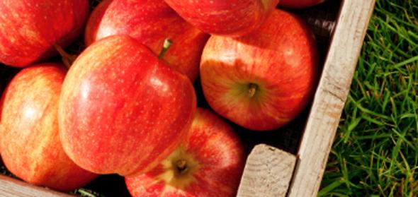 사과껍질 이렇게 활용해 보세요~