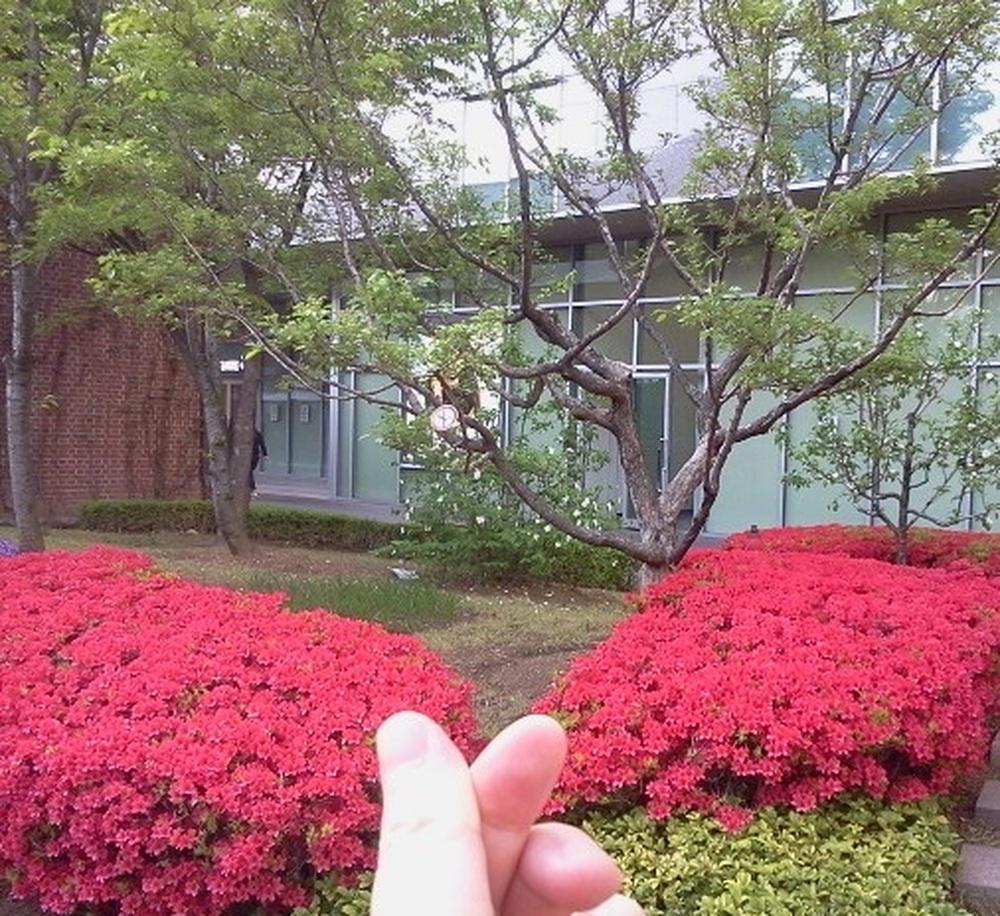 봄나들이 봄꽃을 만나다