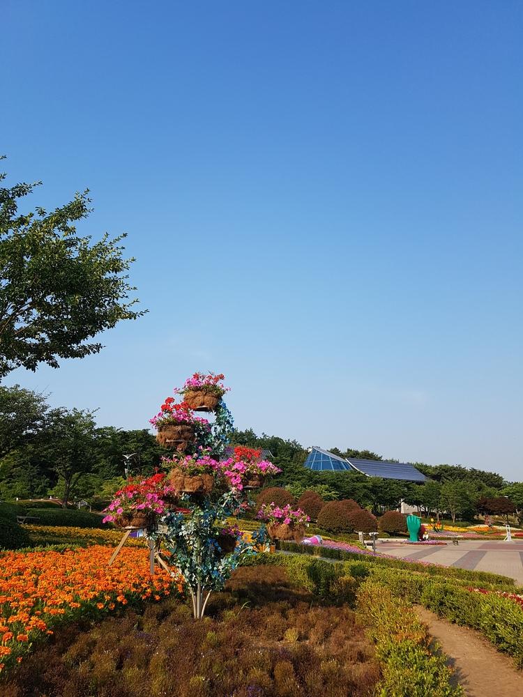 꽃과 하늘