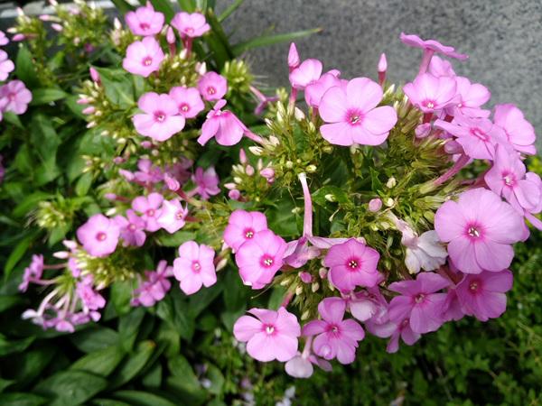 친정아버지의 꽃사랑