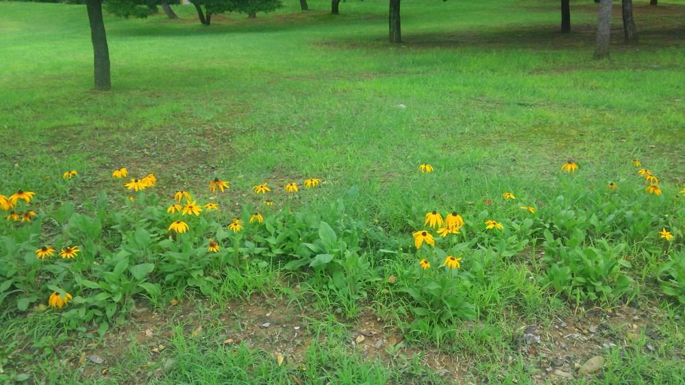 노란 해바라기, 초록풀과 친구 하다