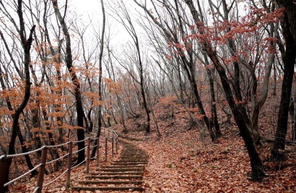 겨울 준비 들어간 우리동네 뒤산 산책로의 앙상한 나무들..고즈넉함 !