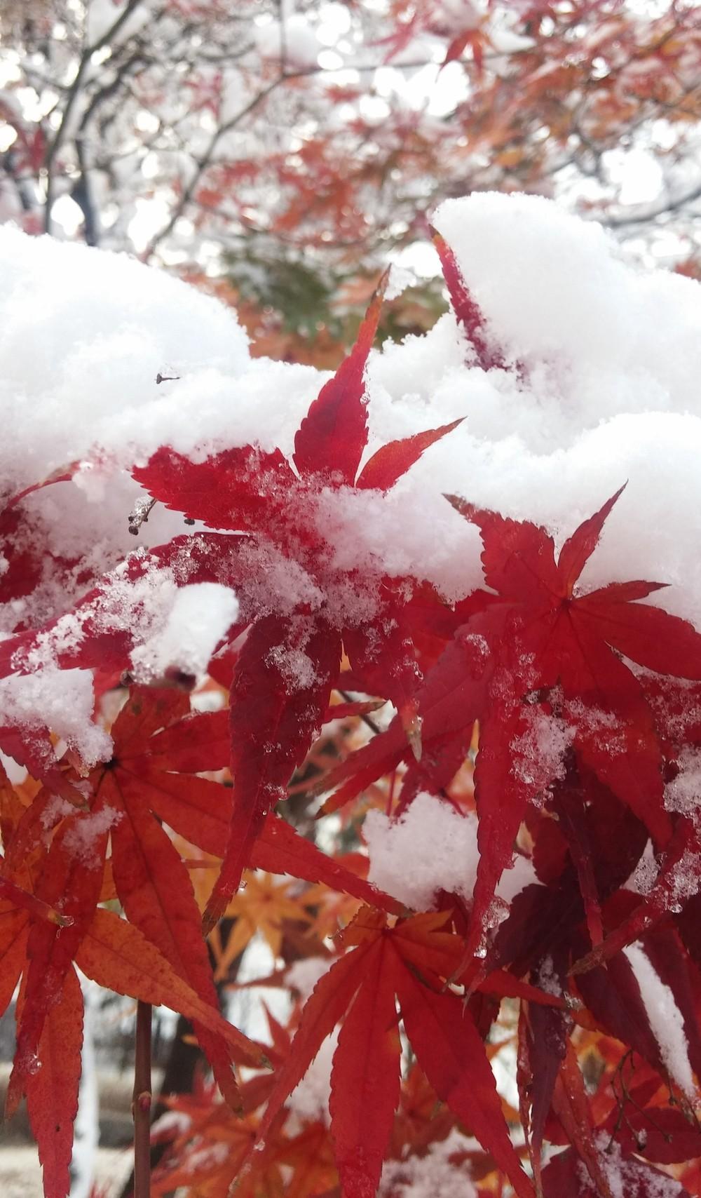 가을의 끝자락에 시작된 올겨울 첫눈