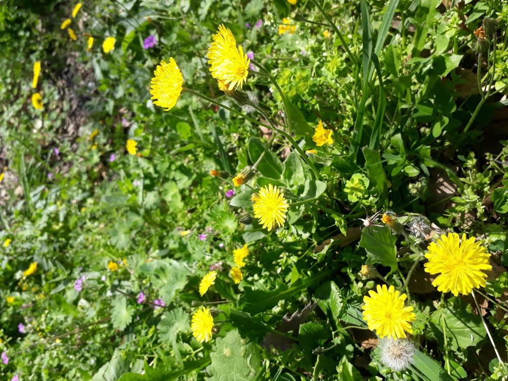 트로이의 봄