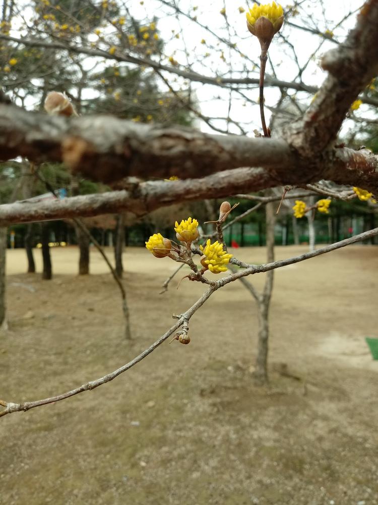 어느새 봄은 가까이 왔네요~