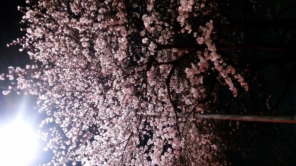 봄밤의 향기를 가슴에 안고.