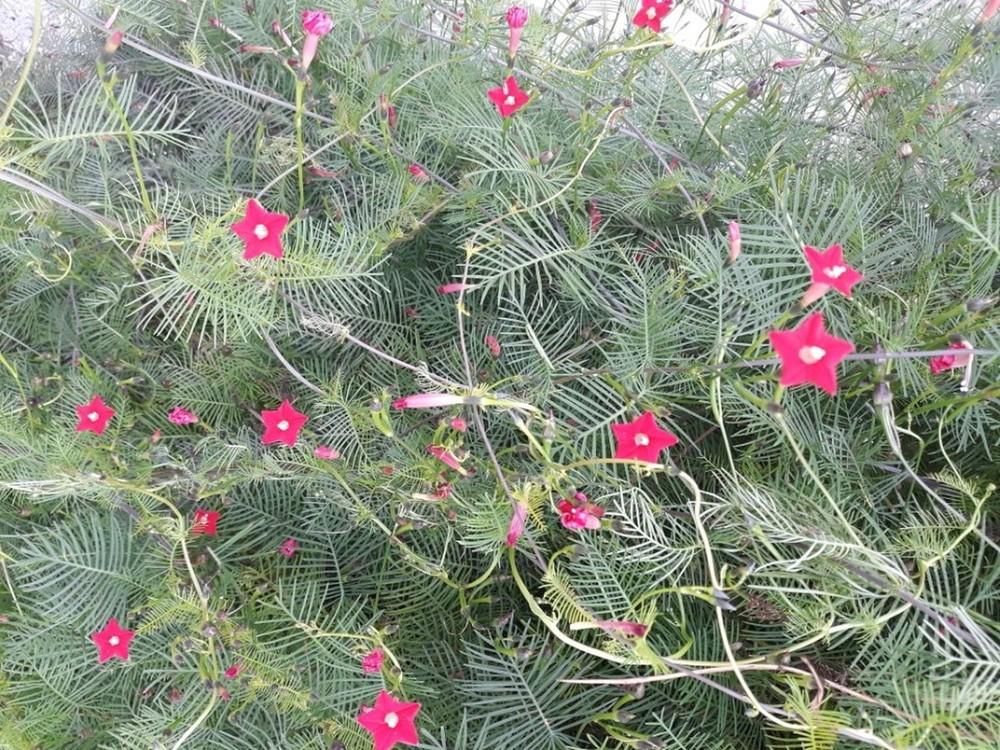 우리집 식물