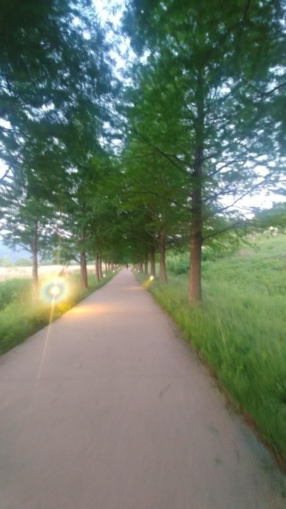 걷기 좋은 시간