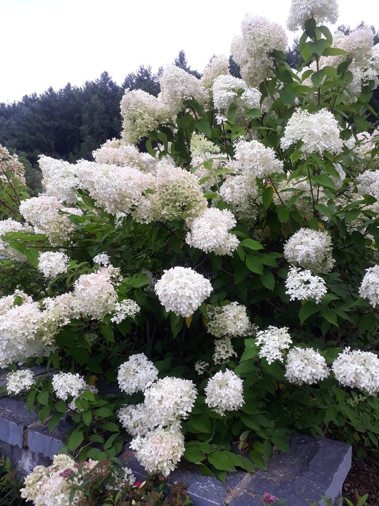꽃과나무 신선한공기
