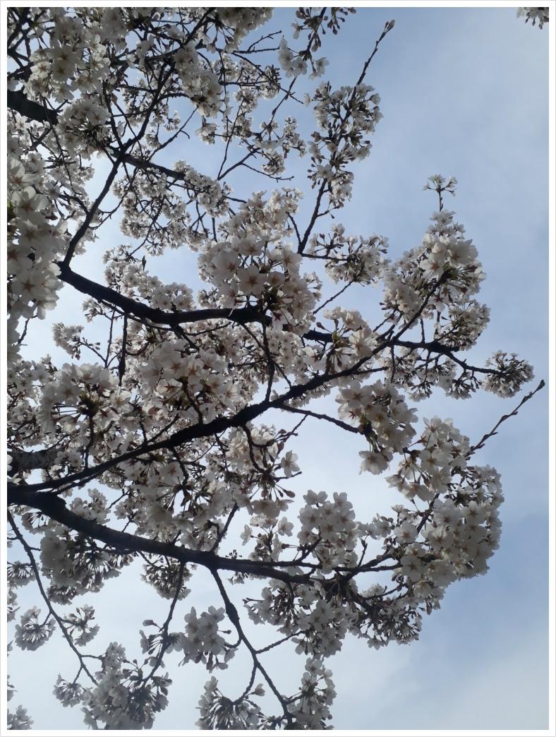 아름다운 봄이 슬프다