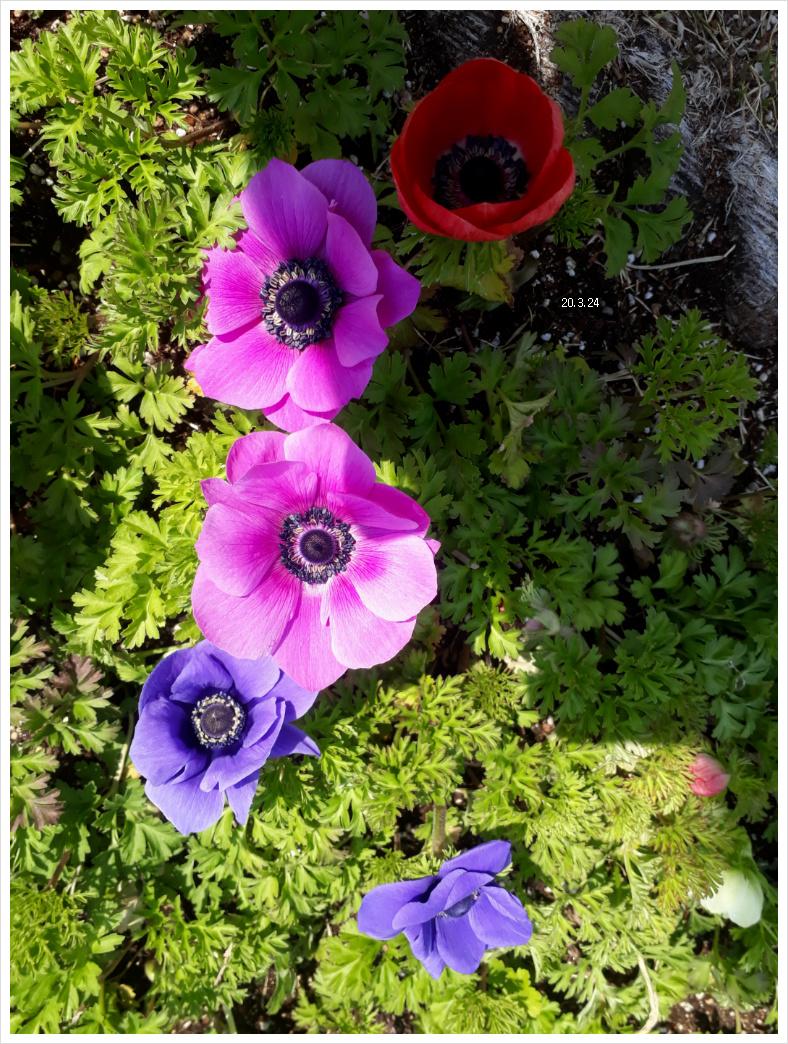 꽃들은 행복하려나