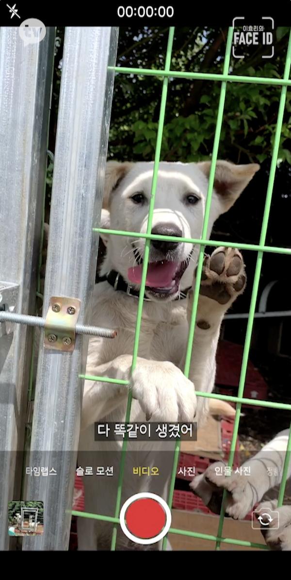 이효리 유기견봉사 10..